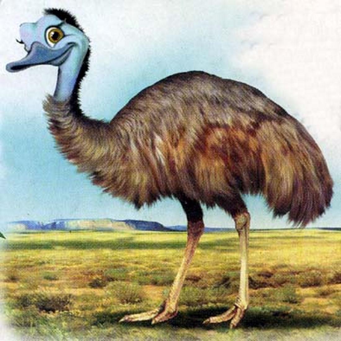 Разноцветный страус картинка дыхании