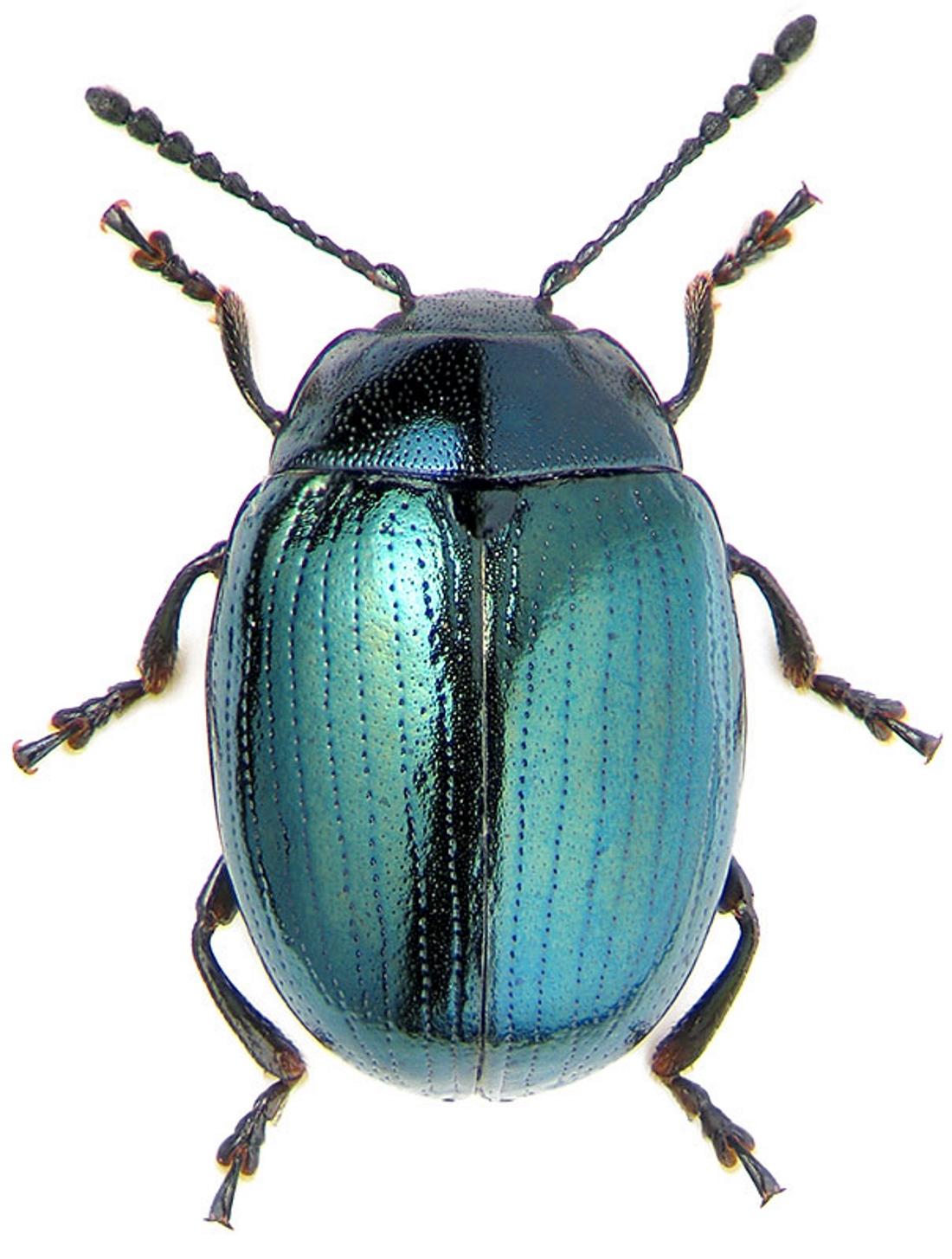 основы лучше большие цветные картинки жуков удобен