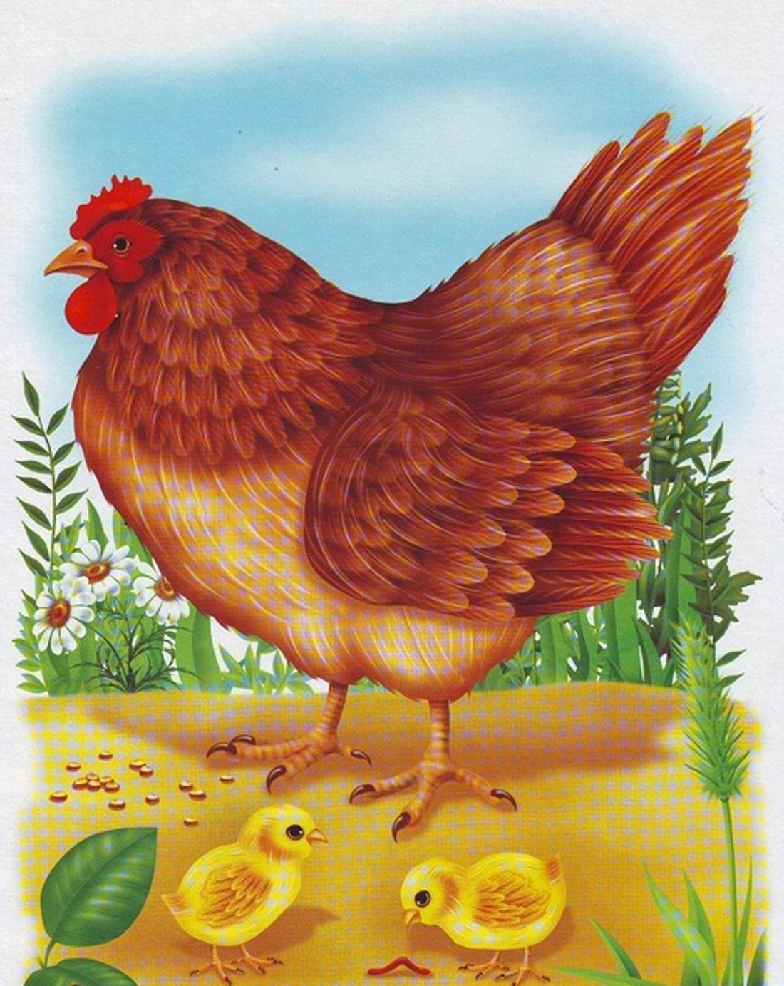 Курицы рисунок картинки