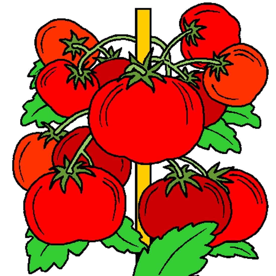 Нарисованные помидоры картинки