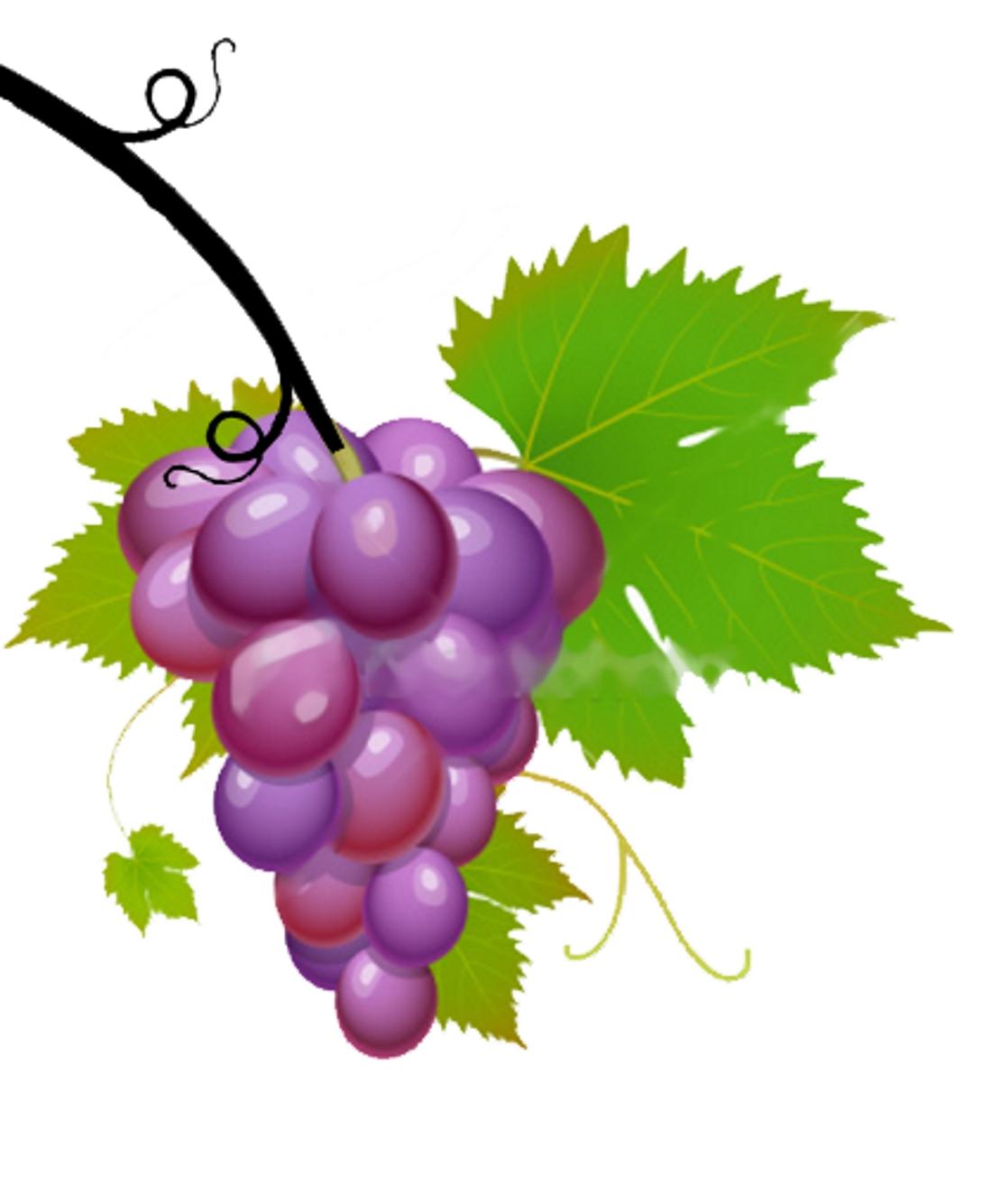 свойства картинка виноградной ветки снимках актриса