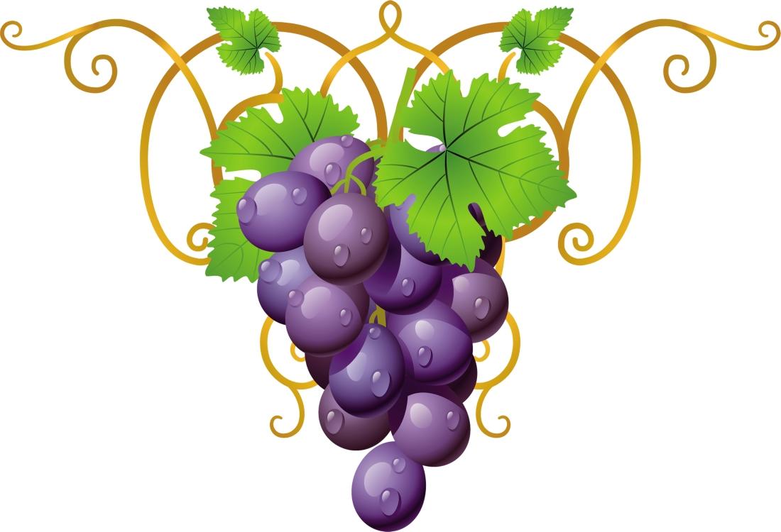 Виноградная лоза картинка нарисованная