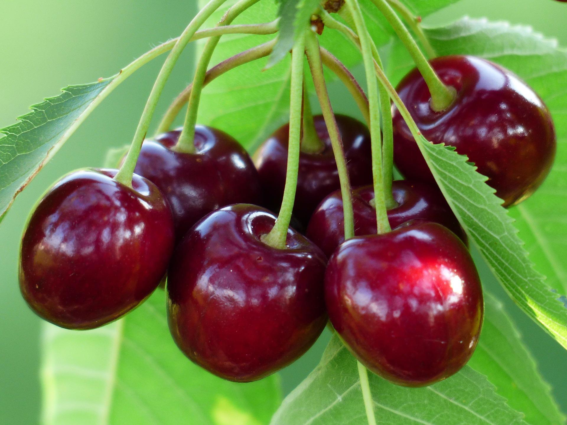 Картинка вишни в хорошем качестве