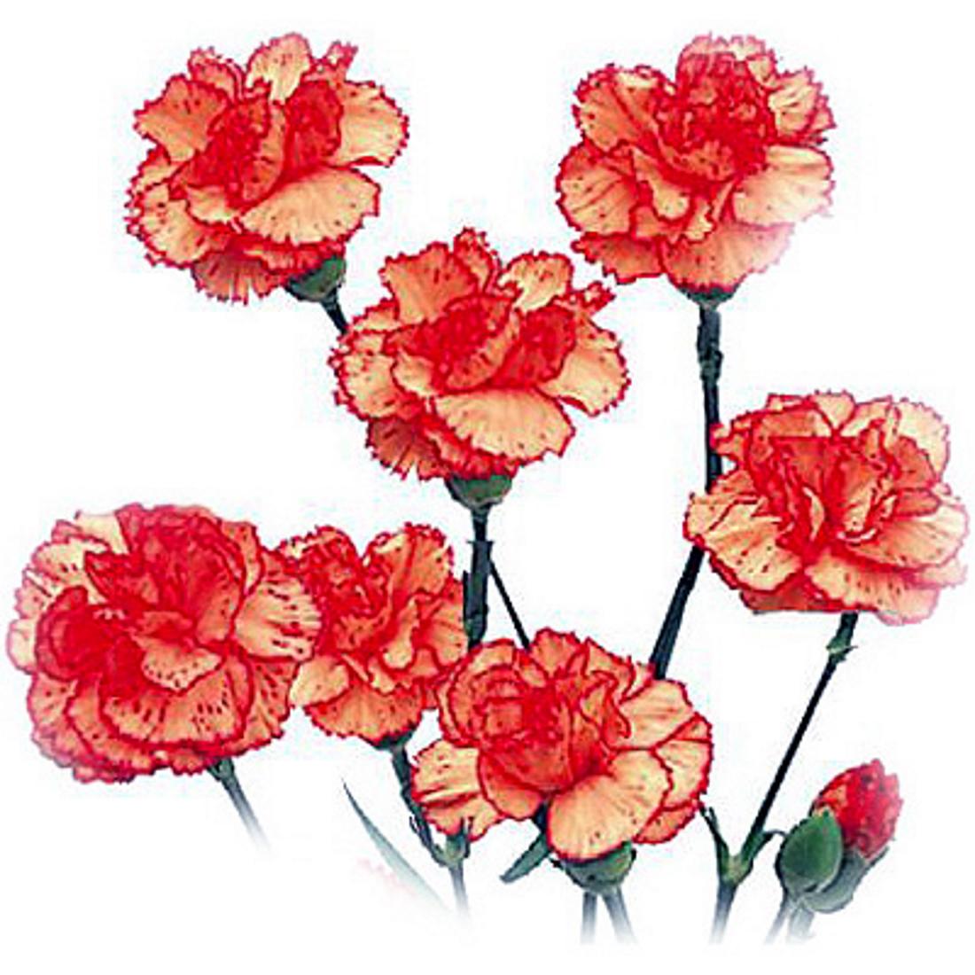 любой хирург картинки цветы на белом фоне анимации 23 февраля особенность каждого мини