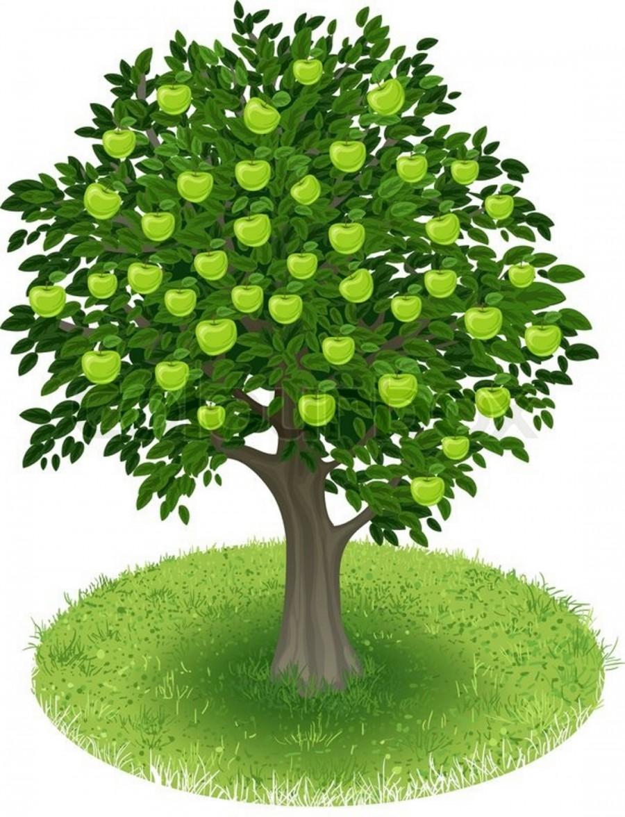 Яблоня с антоновскими яблоками - картинка №13893 ...