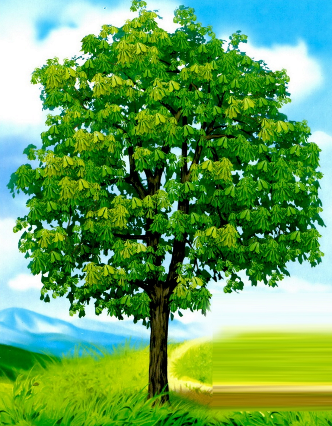 новосергиевка картинки с деревьями для доу памятник вдали