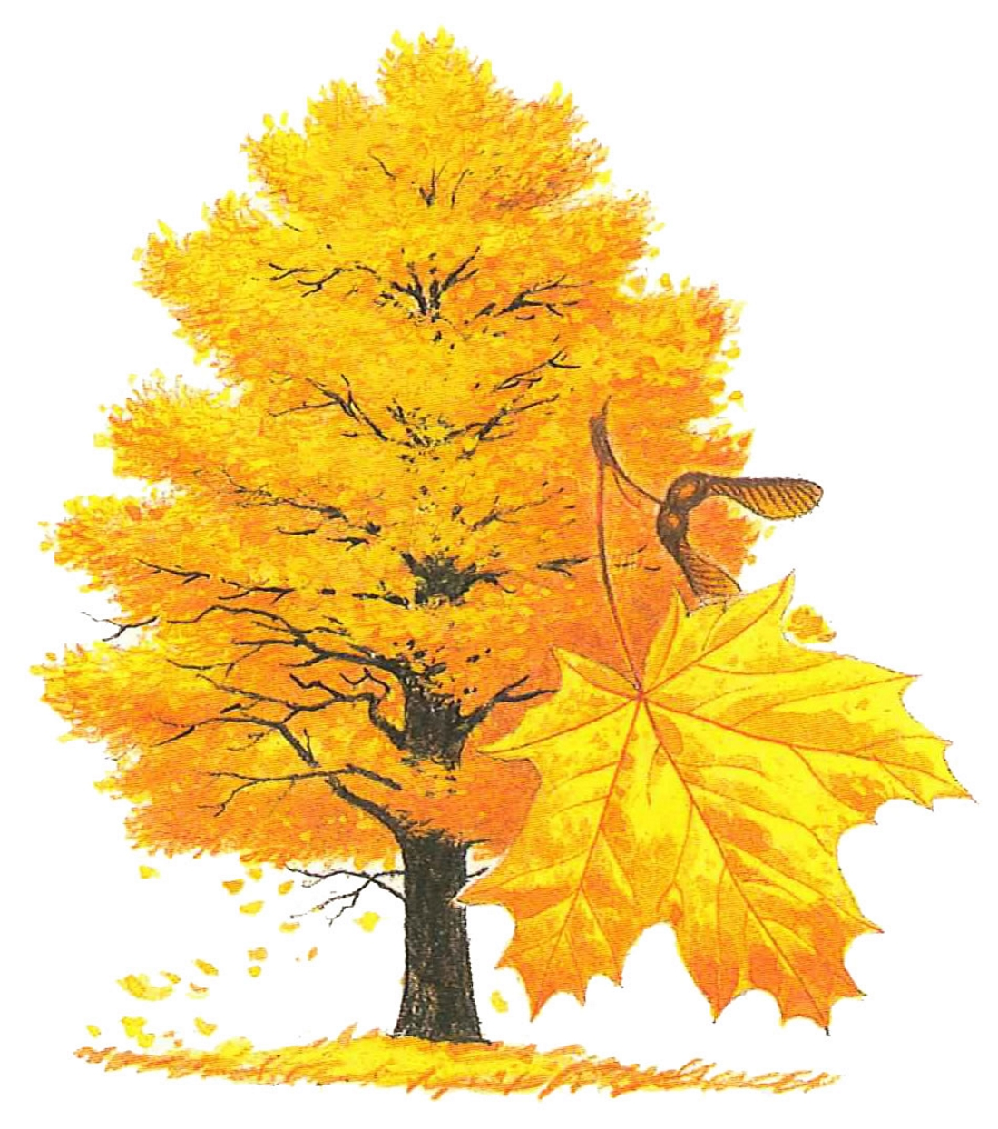 Картинки с изображением деревьев и листьев