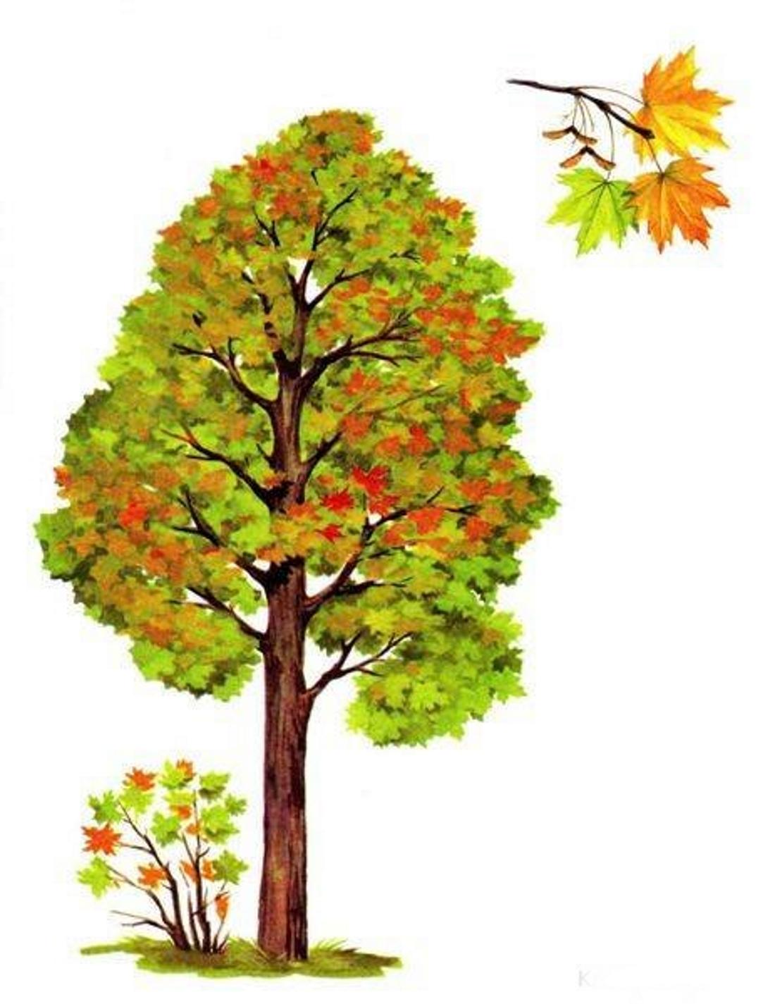 Картинки осеннего клена для детей