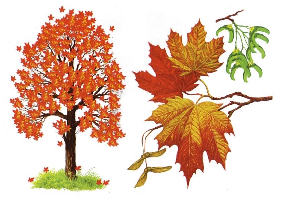 Картинка деревьев осенью для детей