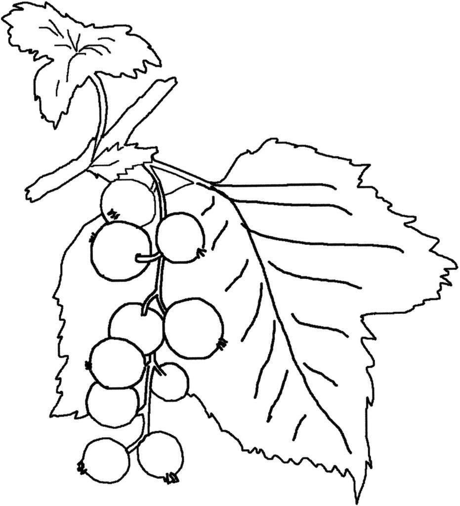 Ягоды смородины - раскраска №7783 | Printonic.ru