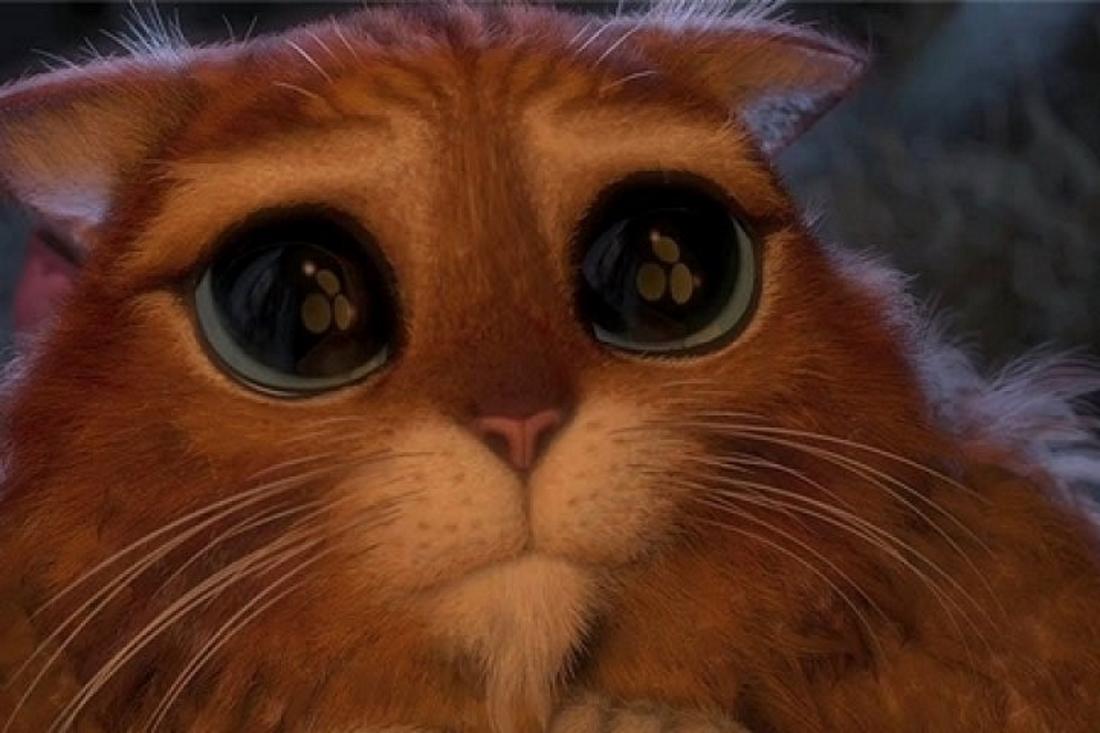 грустный котенок из шрека картинки