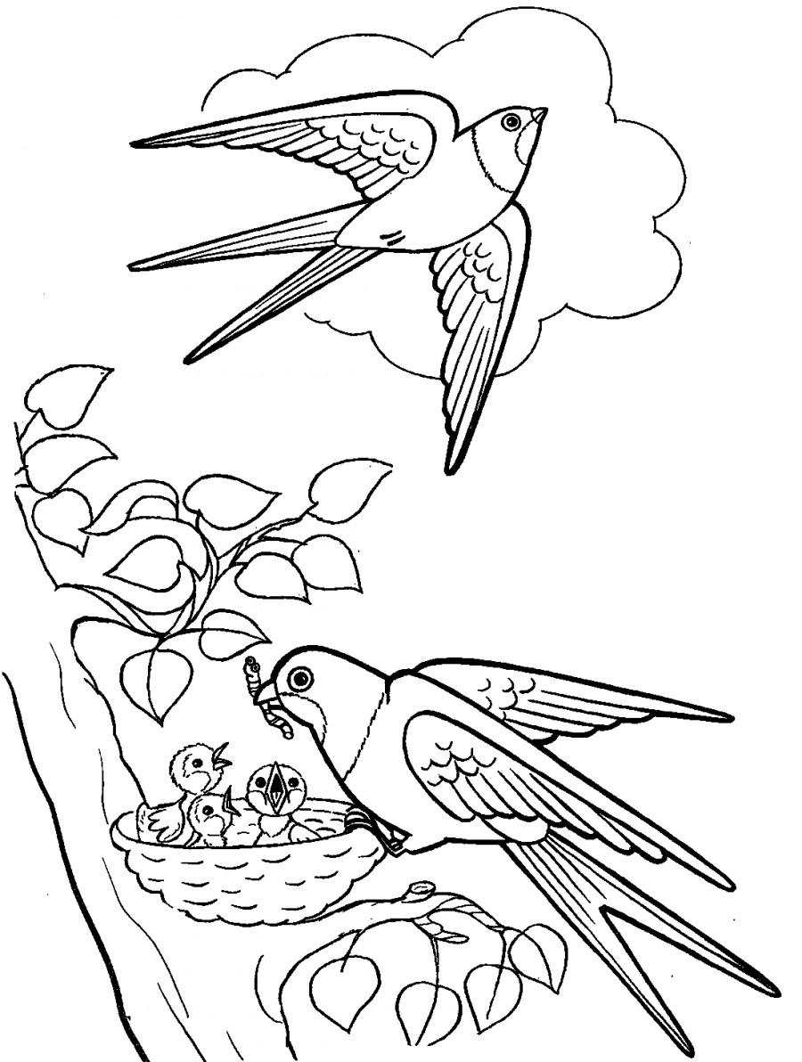 Как нарисовать ласточек в гнезде