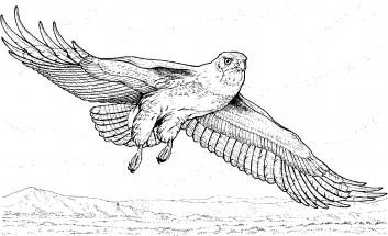 Веселая сова картинки
