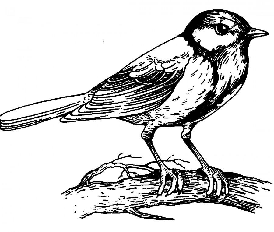 Картинки для детей птицы раскраска для детей 15
