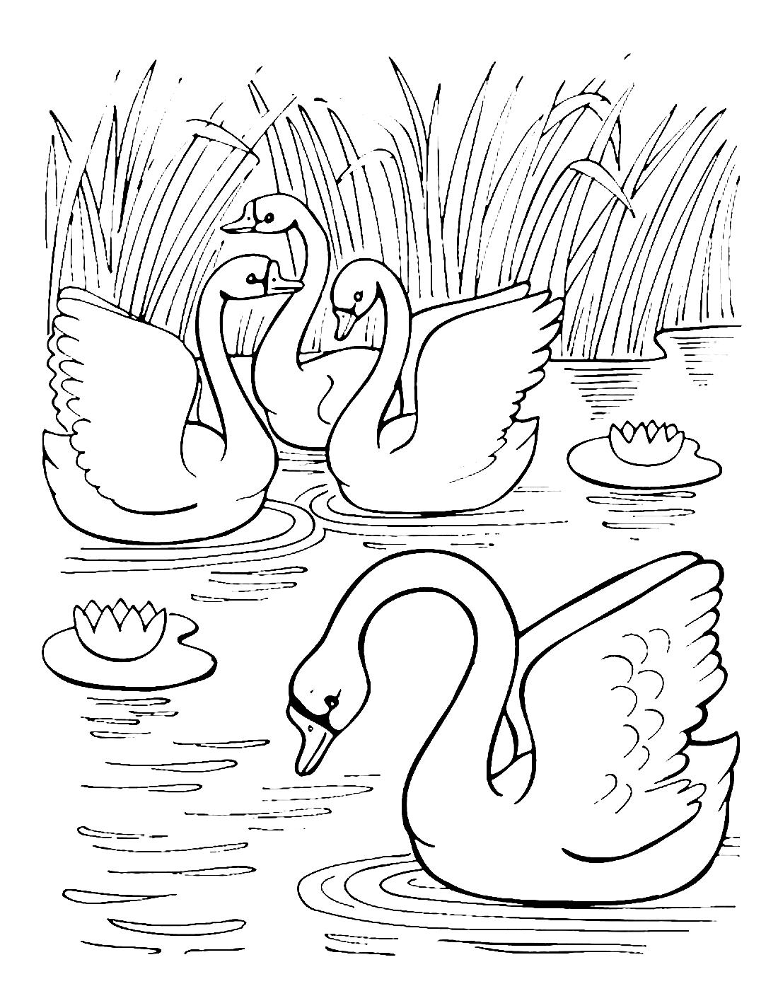 Раскраски лебеди - 5