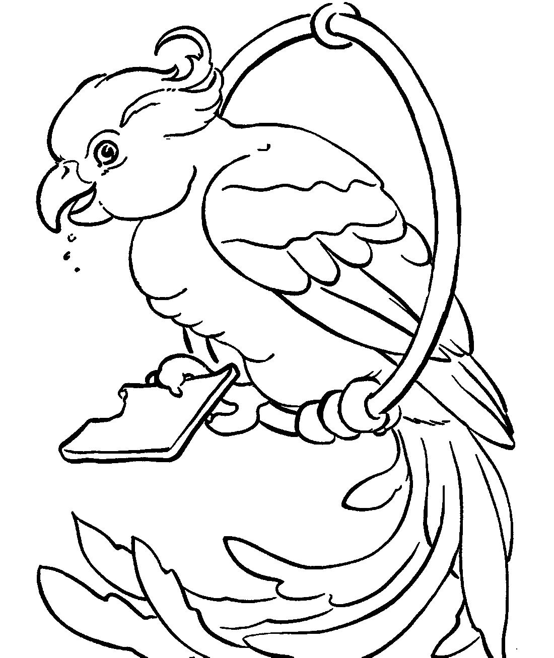 попугай ест печенье раскраска 3044 Printonic Ru