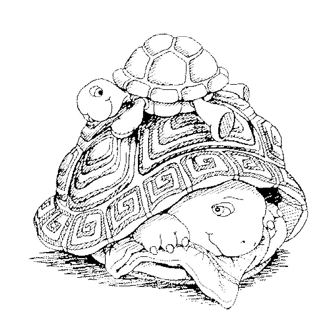 Черепаха с черепашонком - раскраска №2046 | Printonic.ru