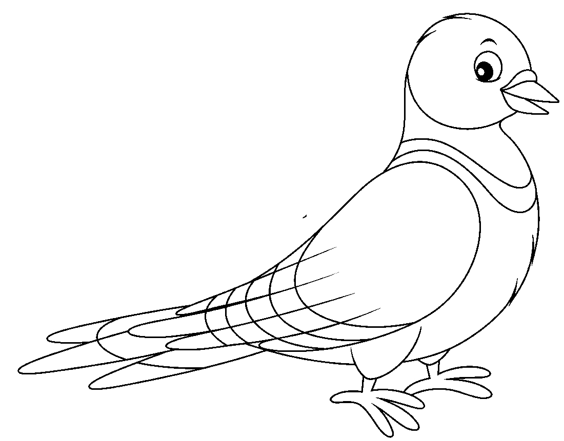 Pigeon drawing for kids