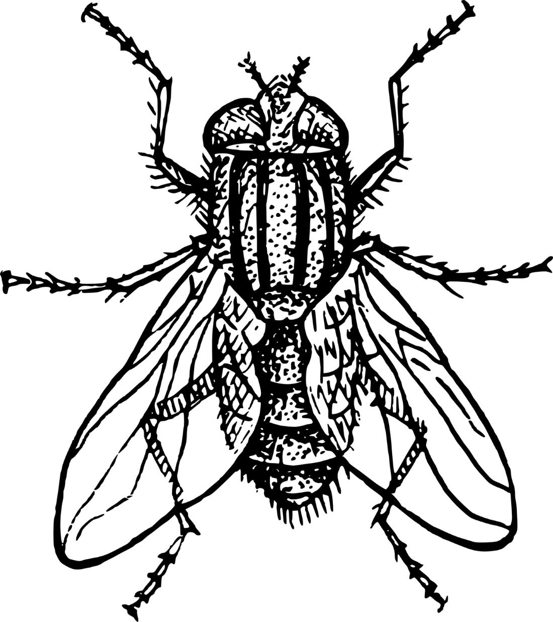муха как живая раскраска 10915 Printonic Ru