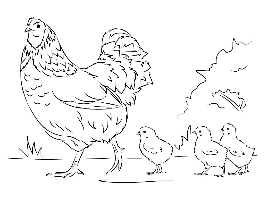 Раскраска курица с цыпленком для детей