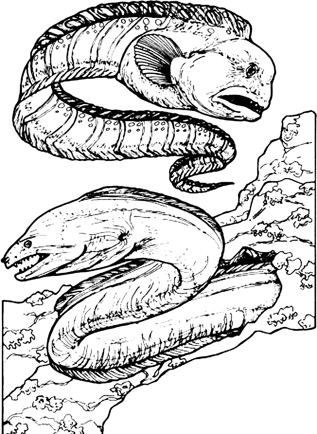 страшные морские угри раскраска 3025 Printonic Ru