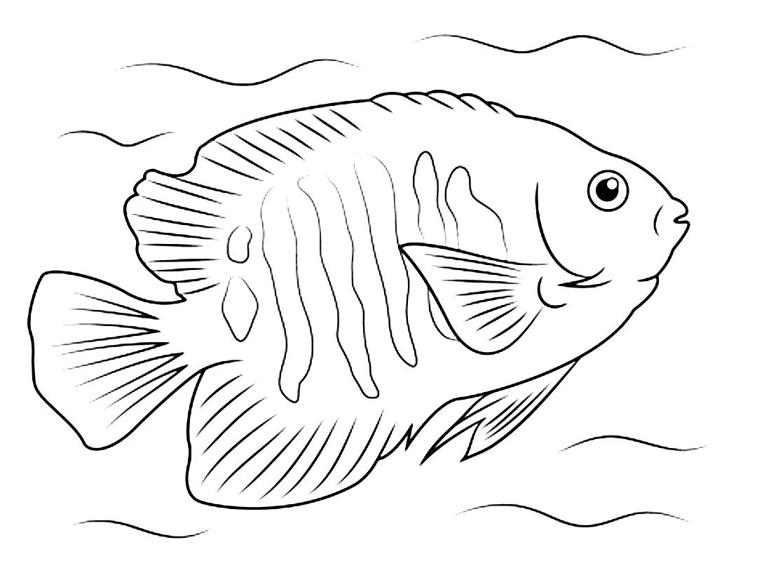 красивая рыба ангел раскраска 2431 Printonic Ru