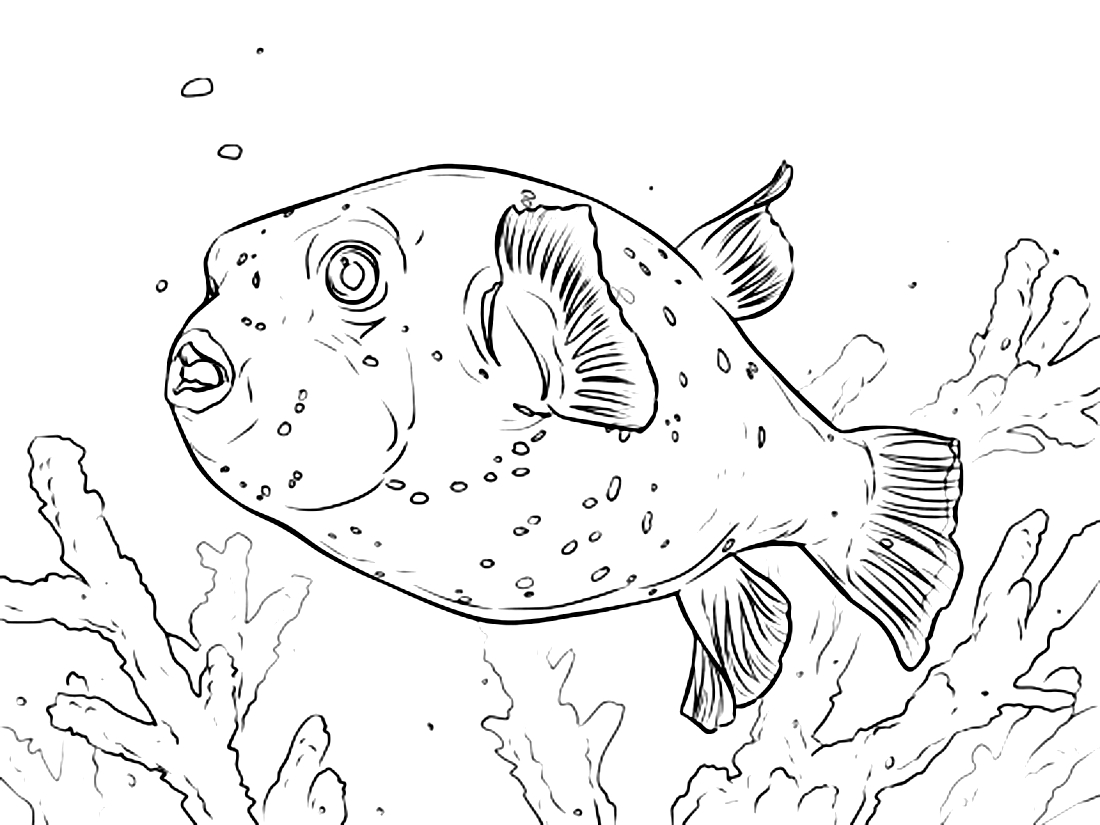 рыба ёж в водорослях раскраска 10959 Printonic Ru