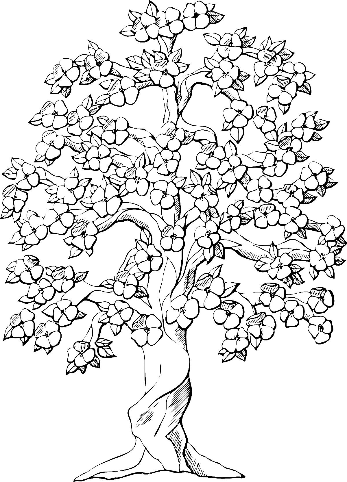 Цветущее дерево - раскраска №13936 | Printonic.ru