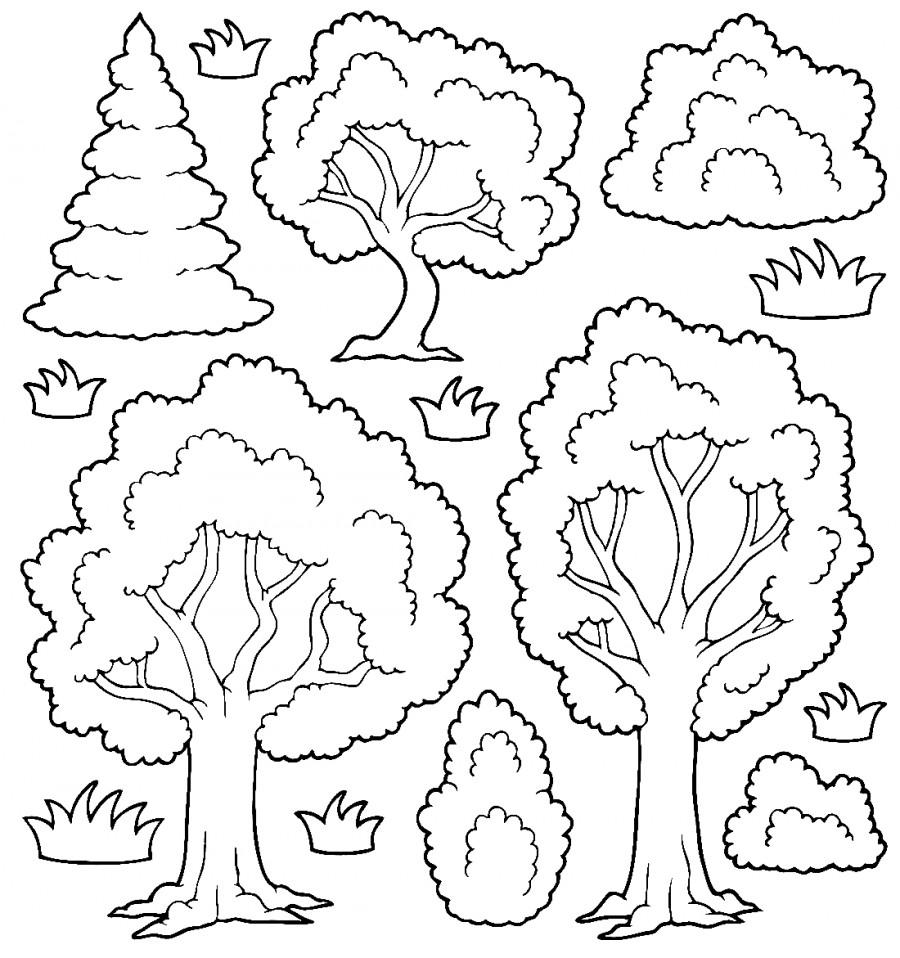 Раскраска разных деревьев
