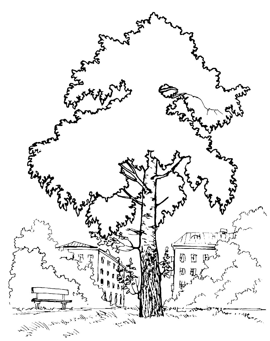 береза в городе раскраска 3095 Printonic Ru