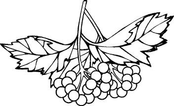 Картинка лимон для детей