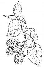 Раскраски малина: распечатать или скачать бесплатно ...