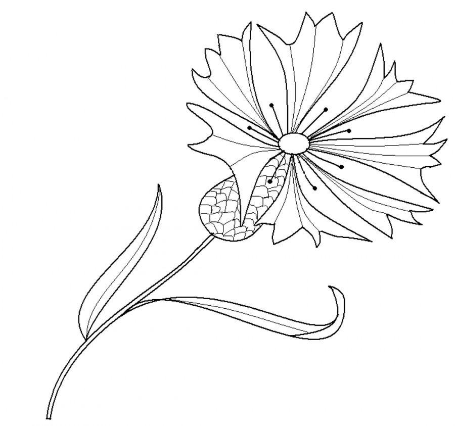 Раскраски цветка василек