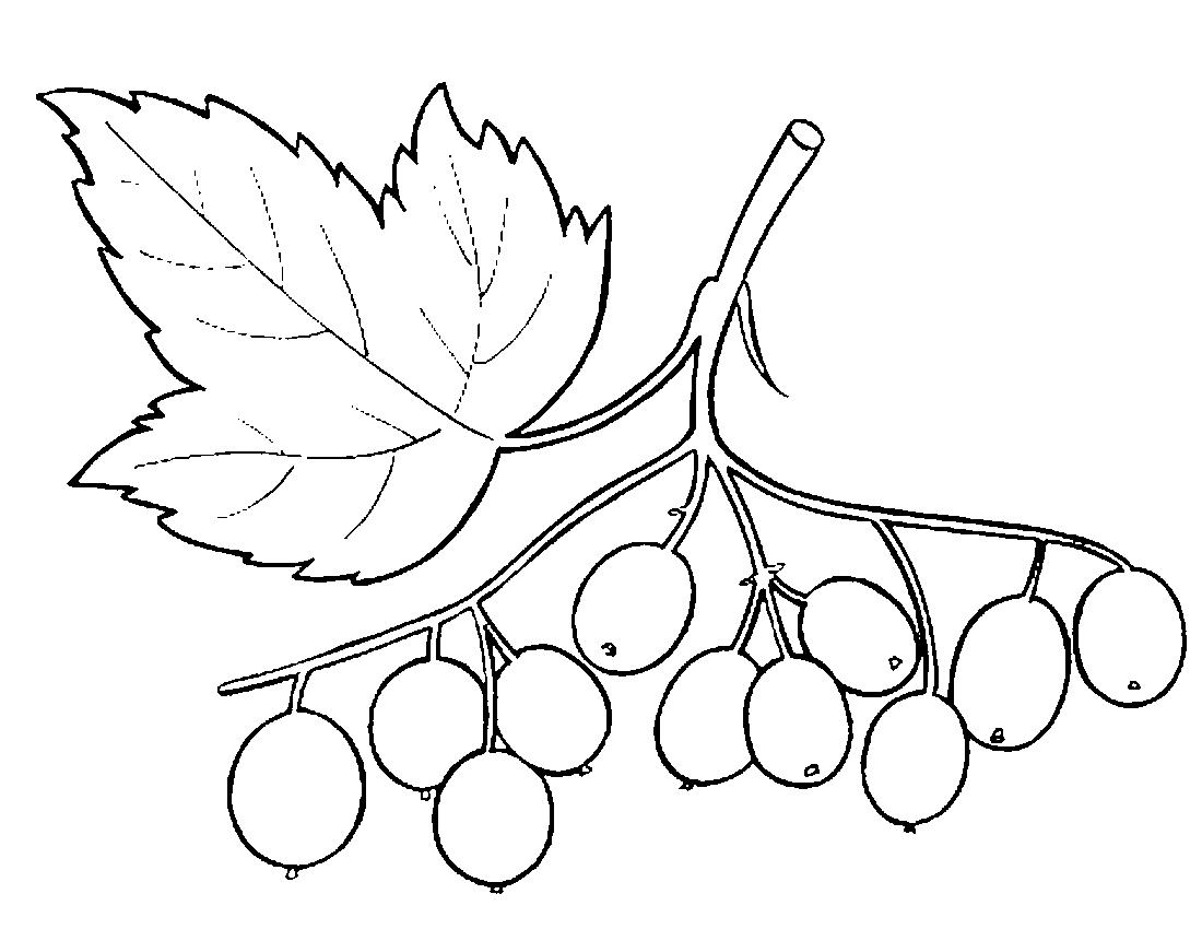 Калина ягода раскраска