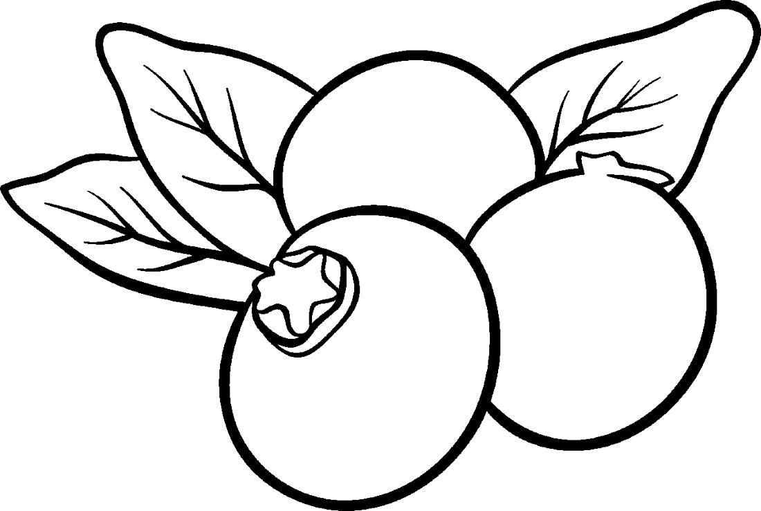 Раскраска голубика