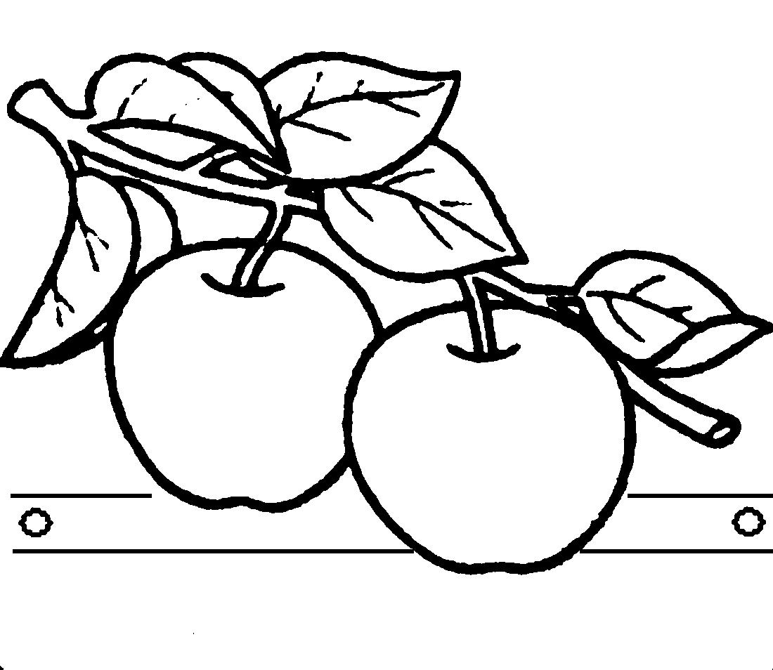 Раскраска ветка яблок