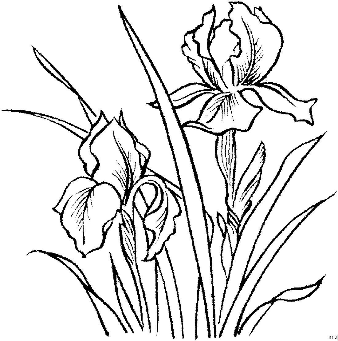 Картинки Цветы  Картинки 24  скачать картинки бесплатно