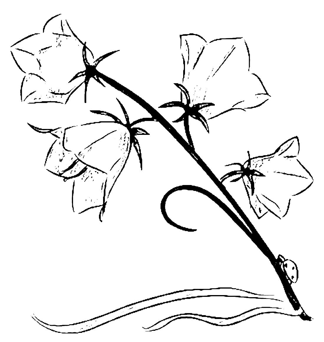 раскраски цветы распечатать или скачать бесплатно страница