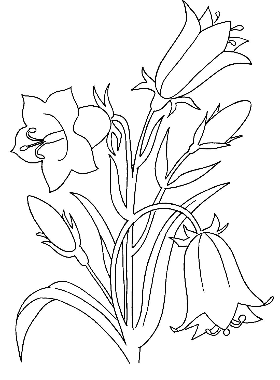 Колокольчики цветы раскраска распечатать