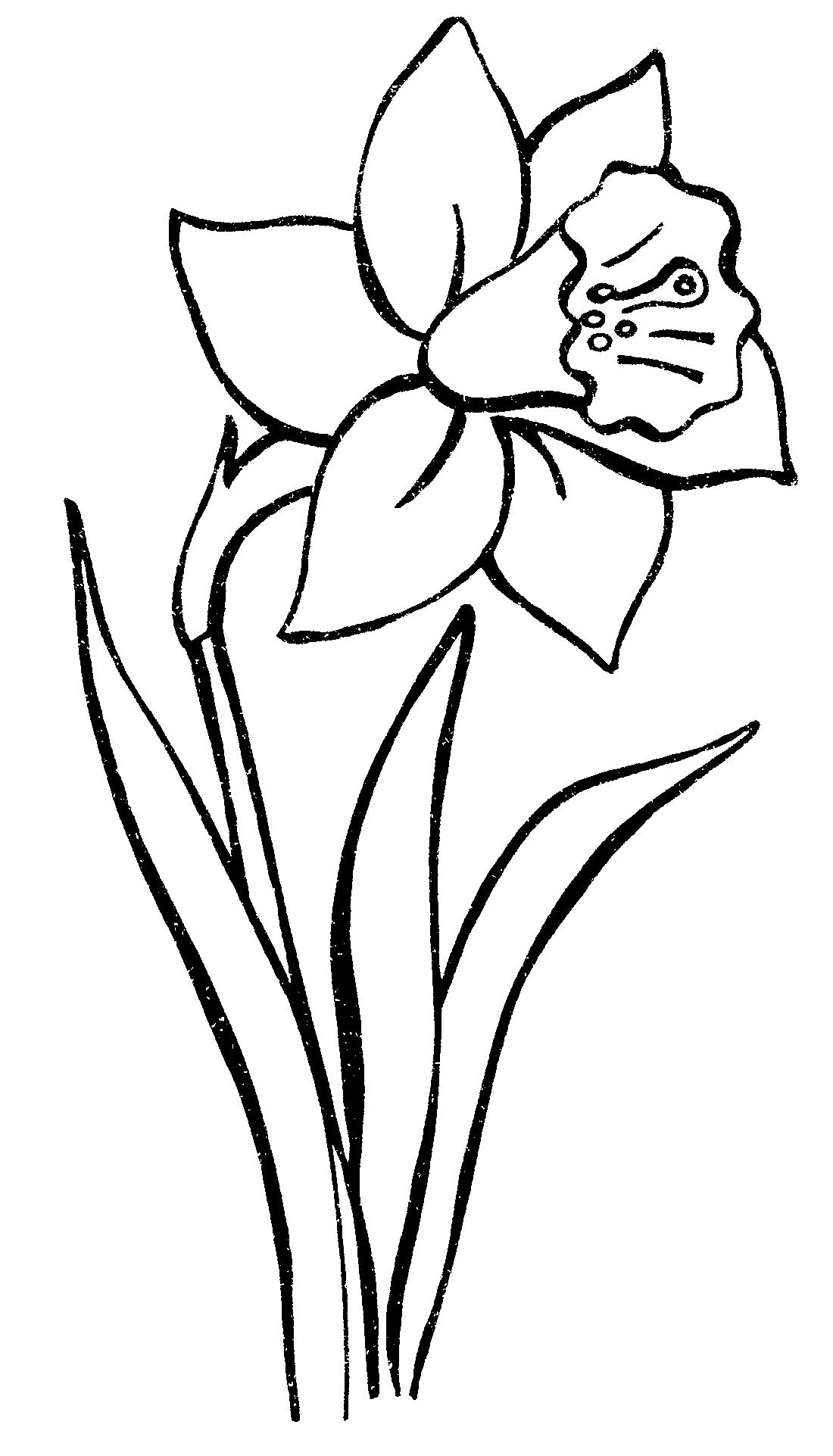 самый редкий цветок мира фото