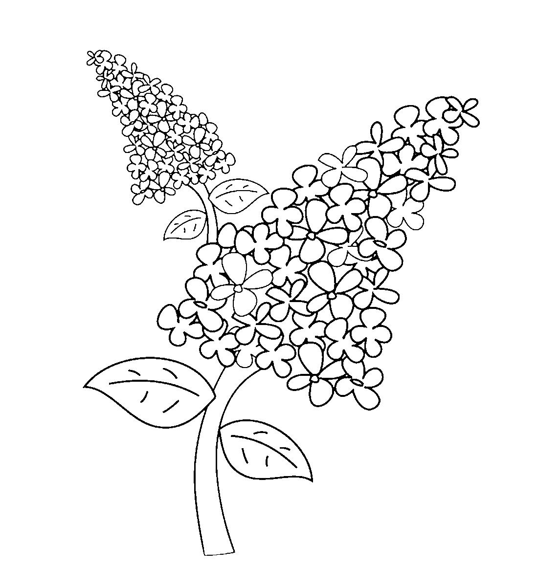 Сиреневые цветы - раскраска №3955 | Printonic.ru