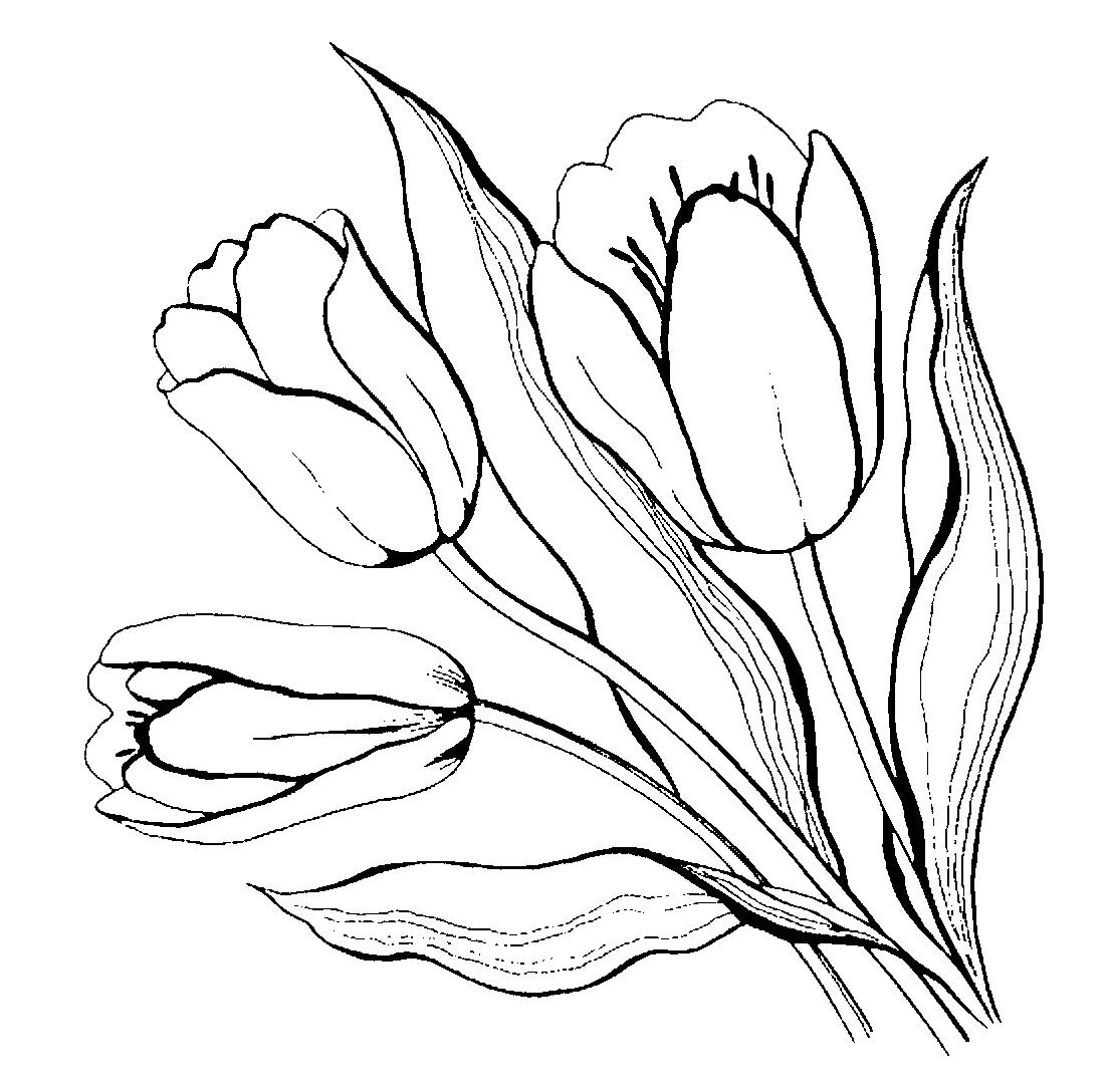 Тюльпаны - раскраска №4122   Printonic.ru