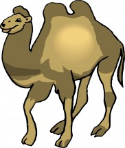 Верблюжонок картинки для детей 5