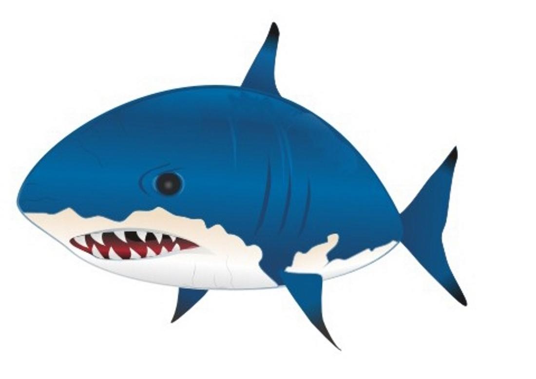 картинки для детей акулы