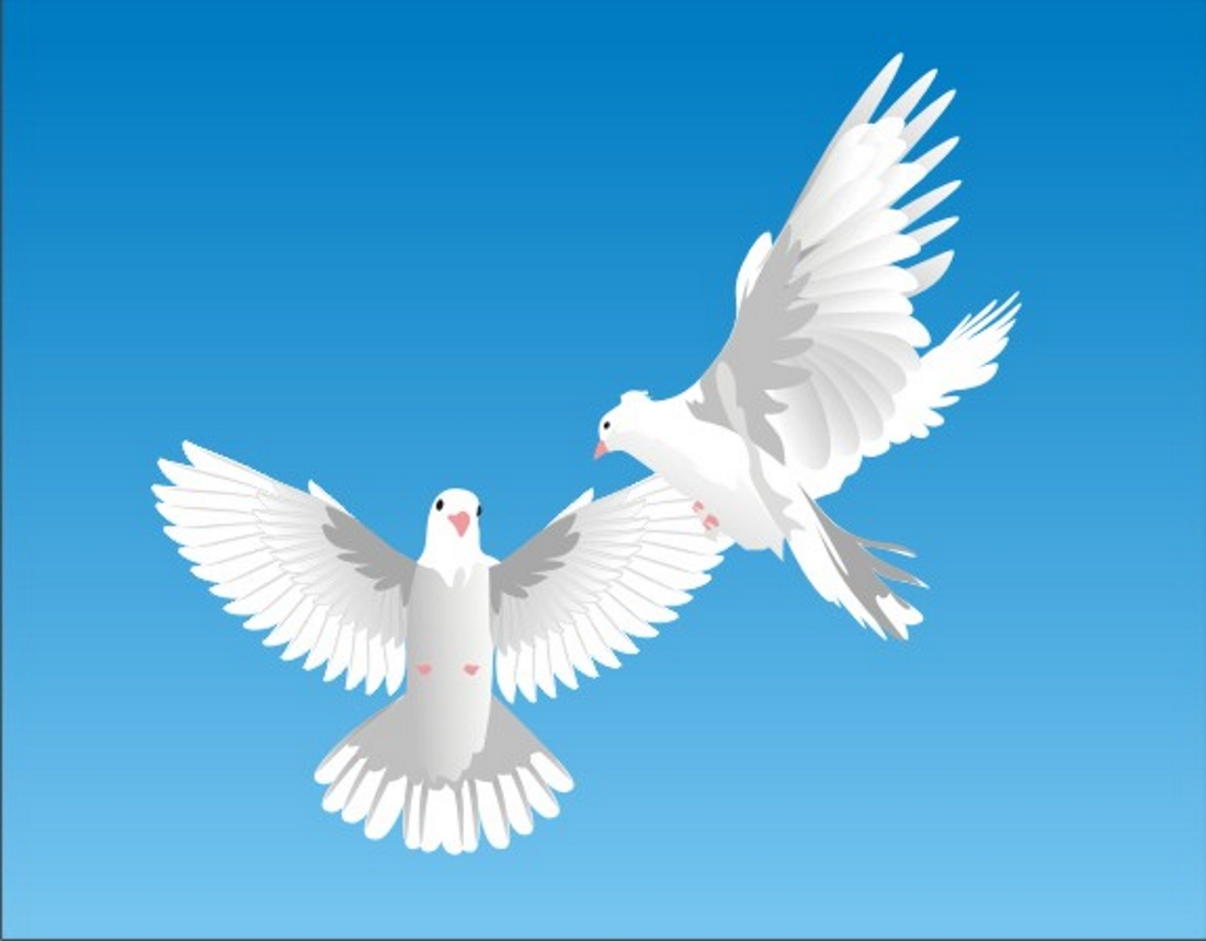 ᐈ Голуби картинки и фото голуби скачать фотки на
