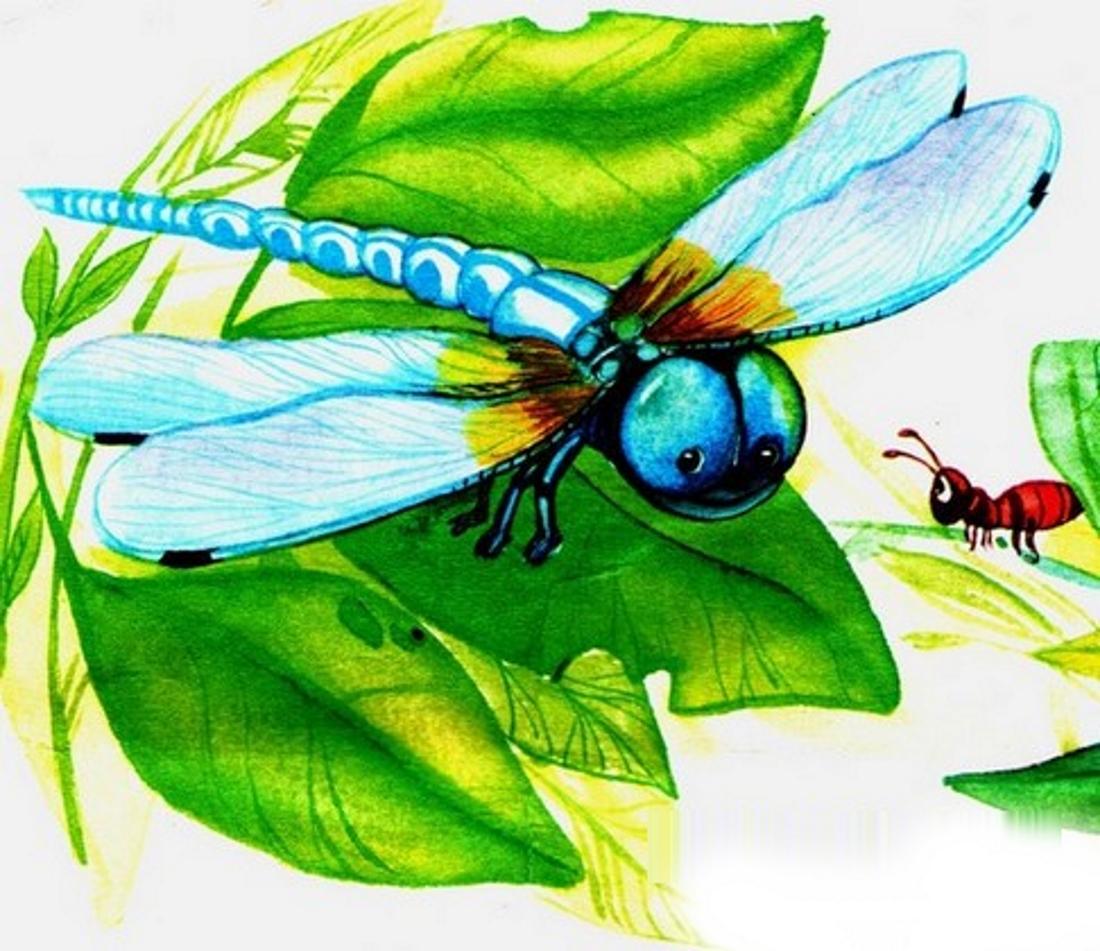 Картинка стрекоза для детей