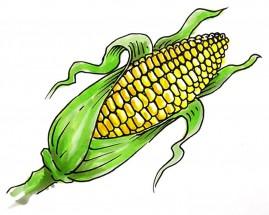картинки для детей кукуруза