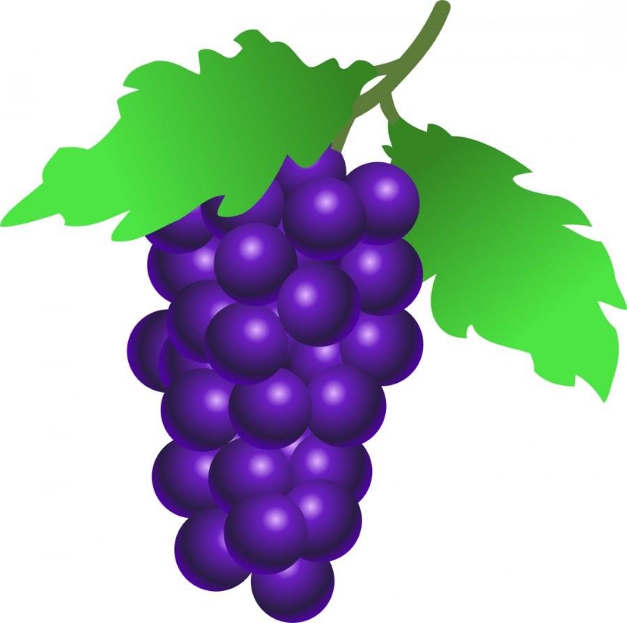 Рисунки винограда для детей