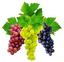 Картинка винограда для детей
