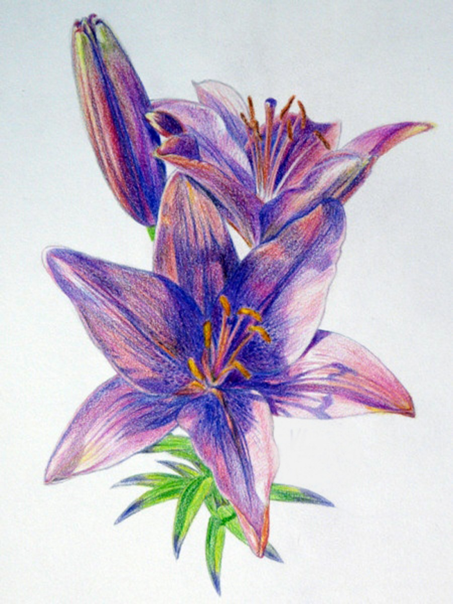 Как нарисовать лилию Рисунок лилии карандашом поэтапно 82